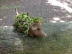 mud mouse