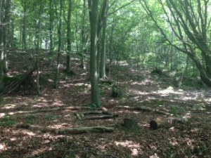 All peace, quiet, and dappled sunlight in the woods today, getting the fire circle and seating ready for Thursday. The woods showed off their bonus benefit of being an excellent natural sunscreen!